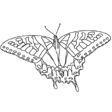 tiger swallowtail butterfly printable west coast lady butterfly coloring pages - Butterfly Printable Coloring Page