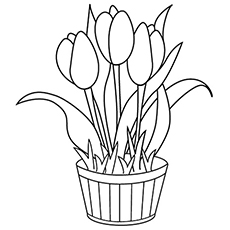 The Tulip Coloring Pages