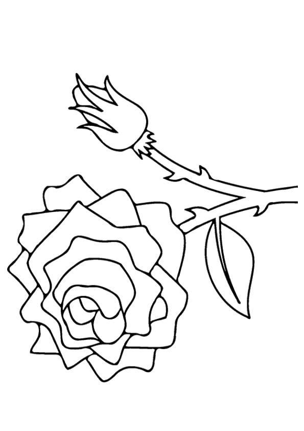 The-Valentine%E2%80%99s-Rose