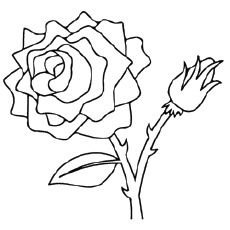 Coloring Page of Valentines Rose