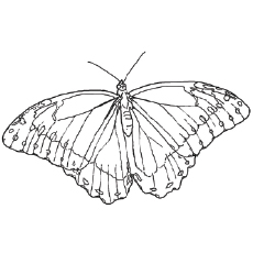 Printable West Coast Lady Butterfly Coloring Pages for Kids