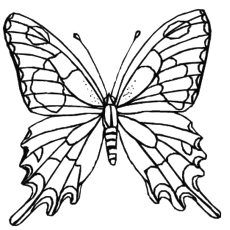 Zebra Swallowtail Butterfly Coloring Pages