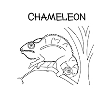 The-a-simple-small-chameleon-16