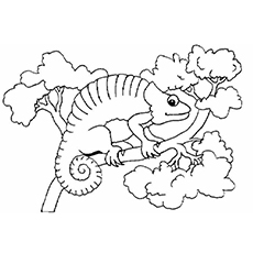 chameleon coloring pages to print
