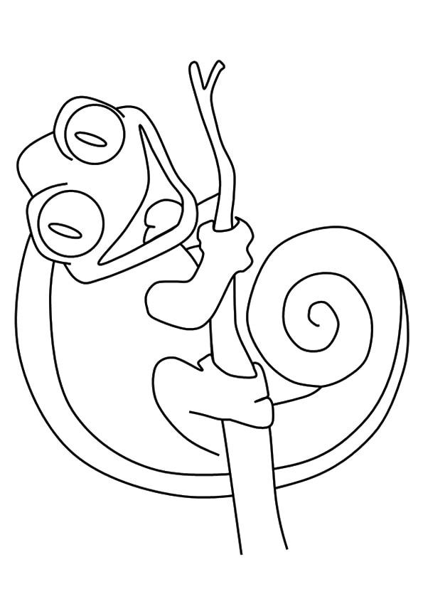The-coiled-smiling-chameleon