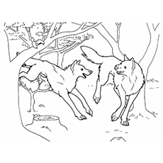 complete wolf coloring pages to print - Wolf Coloring Pages