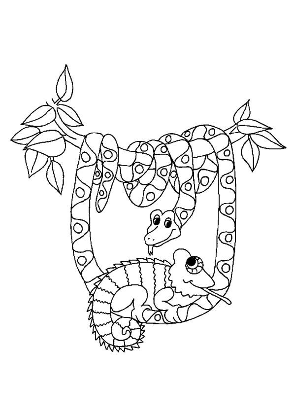 The-snake-and-chameleon