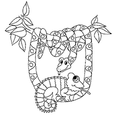 chameleon coloring pages Chameleon Coloring Pages   Free Printables   MomJunction chameleon coloring pages