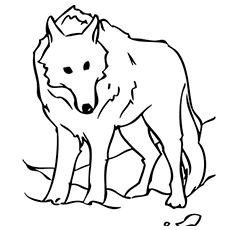 picture relating to Printable Wolf Pictures identified as Best 15 Totally free Printable Wolf Coloring Webpages On line