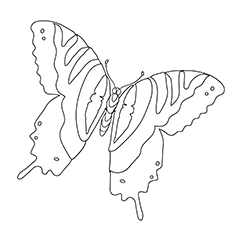 Tiger Swallowtail Butterfly Life Cycle Coloring Page