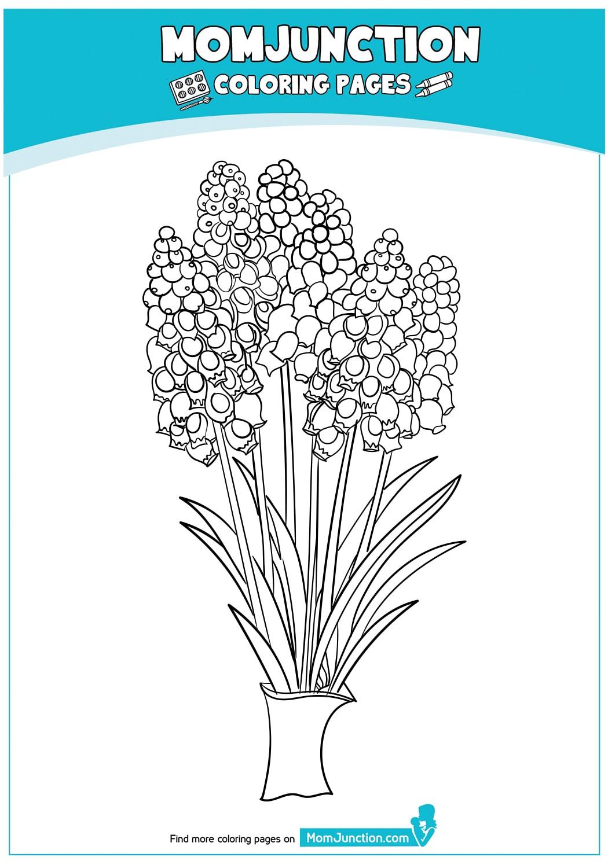 Type-of-Flowers
