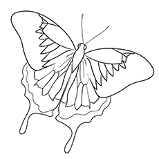 Ulysses Butterfly Printable Image to Color