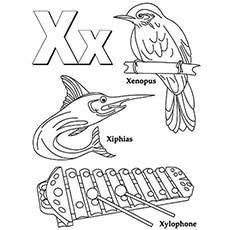 x-animals
