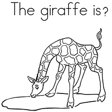 What the Giraffe Is Doing