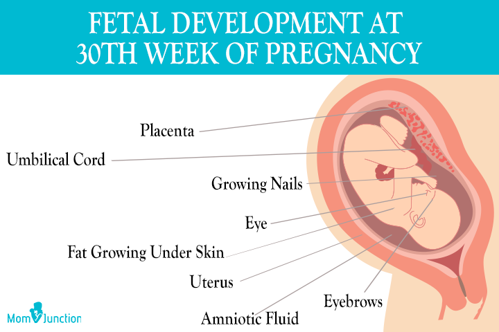 Baby Development At 30 weeks