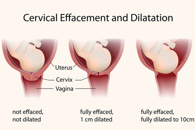 What happens to your cervix during birth or labor incnut incnut incnut featured image ccuart Images
