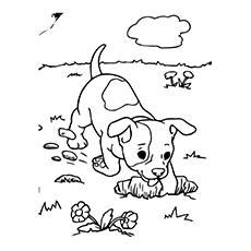 Puppy Digging
