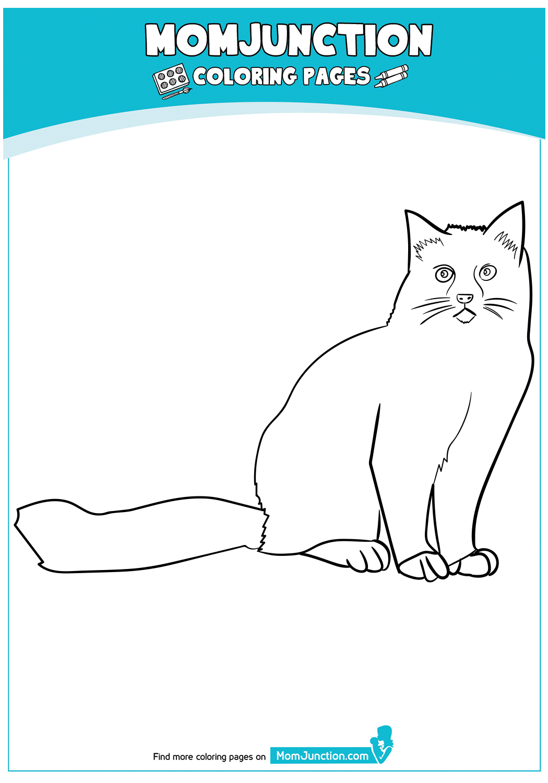 Ragdoll-Cat