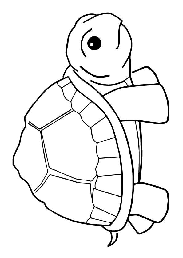 Small-Turtle-colouring
