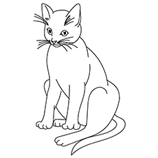 Picture of a Big Cat to Color for Kids