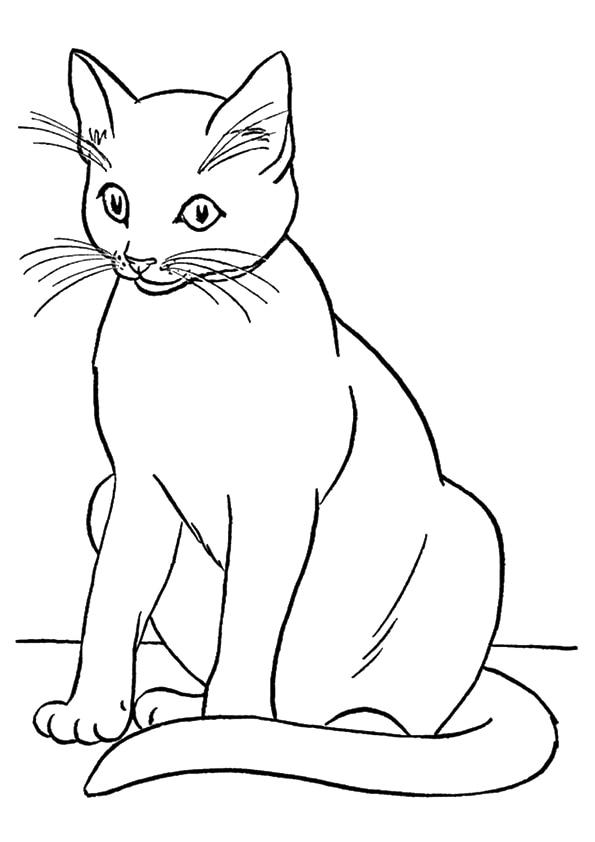The-Big-Cat