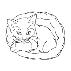 free printable coloring sheet of realistic cat sitting in basket - Free Printable Cat Coloring Pages