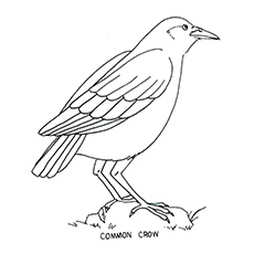 photo regarding Free Printable Bird Coloring Pages known as Supreme 20 Cost-free Printable Chook Coloring Web pages On-line