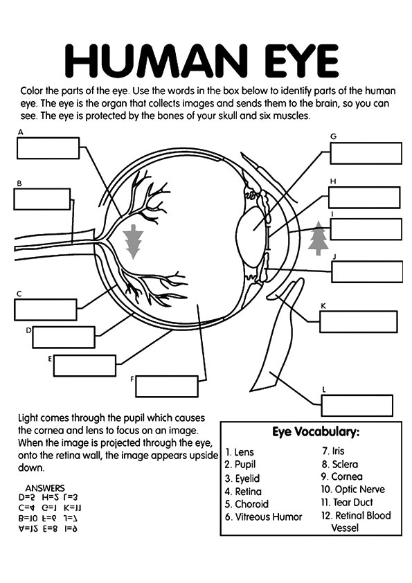 The-Eye-Anatomy