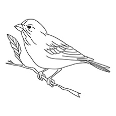free bird coloring pages Top 20 Free Printable Bird Coloring Pages Online free bird coloring pages
