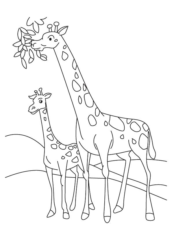 The-Giraffe-And-Calf