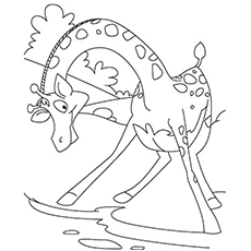 Giraffe Drinking Water Coloring Pages For Kids