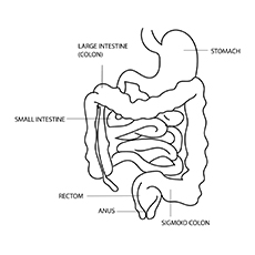 The-Intestine-Anatomy-16