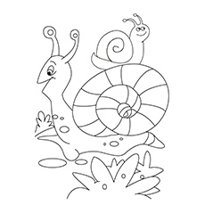 10 Amazing Snail Coloring Pages For Your Toddler
