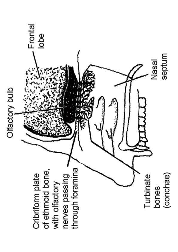 The-Nose-Anatomy