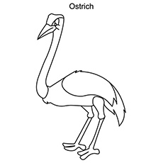 The-Ostrich