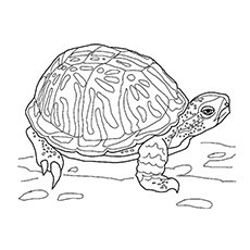 Sad Turtle Pic to Color Free