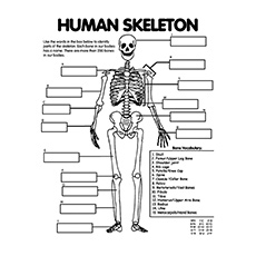 Human Skeleton System Anatomy Coloring Pages