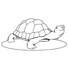 Lazy Turtle Walking Coloring Sheet