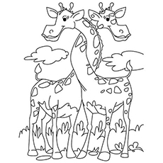 Two Giraffes Entwined Coloring Page