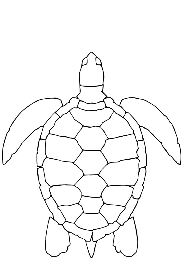 Turtle-Aerial-View