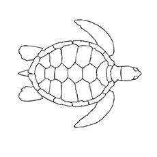 picture of turtle swimming in water coloring shee