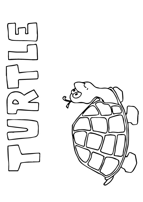 Turtle-Capital-T