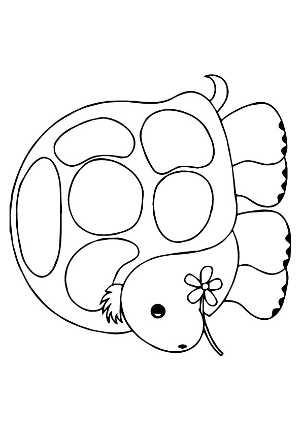 Turtle-Decorated-Turtle-Shell