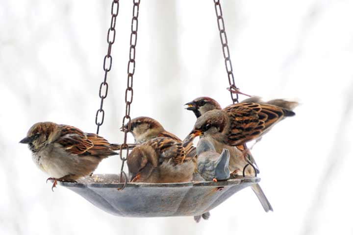 1. Get close to nature Make a bird feeder
