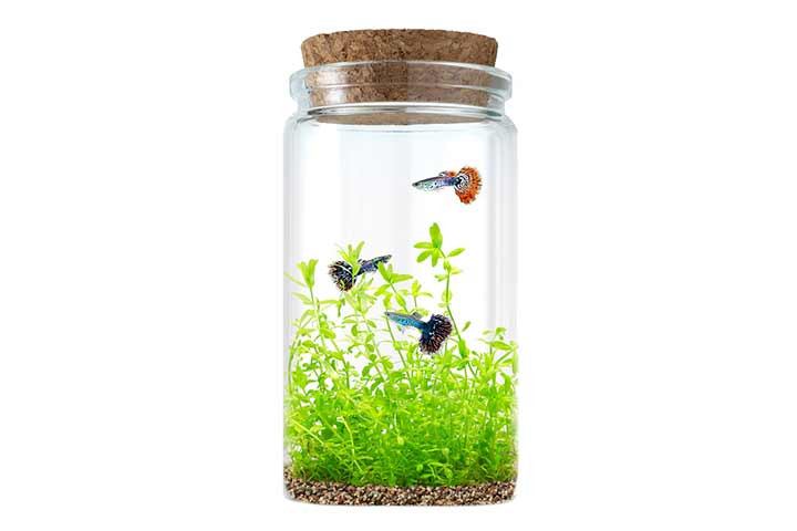 11. Make a beach Jar aquarium