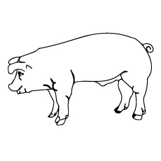 Coloring Page of American Yorkshire Pig