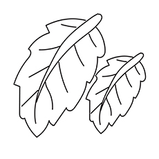 Banana Leaf Coloring Pages to Print