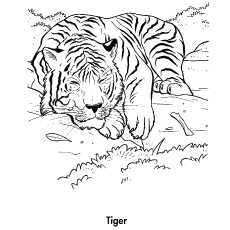 photograph relating to Printable Tiger Pictures titled Greatest 20 No cost Printable Tiger Coloring Web pages On-line