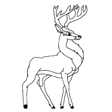 Black Buck Deer Printable to Color