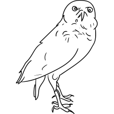 Burrowing Owl Collared Scoops Coloring Page